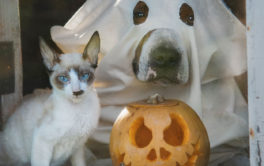 Your pet cat's Halloween costume should be simple, like makeup