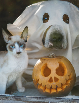 Don your dog in a Halloween costume, but keep them from candy