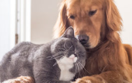 In any home, the cat and the dog can live together peacefully