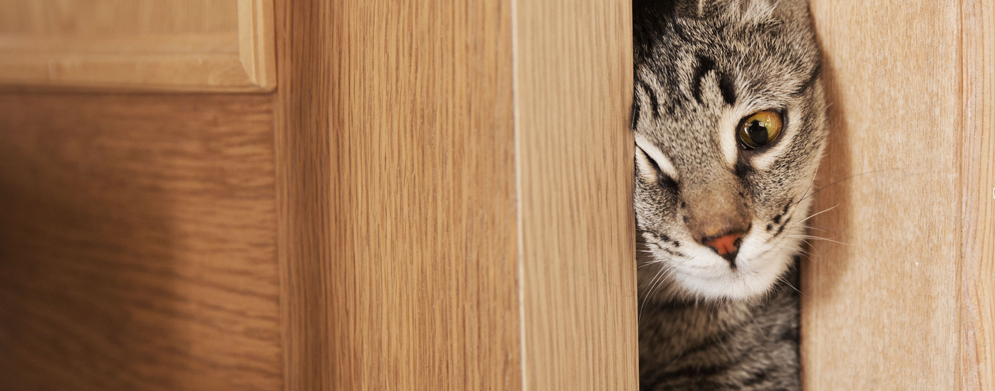 Maintain pet insurance for your cat in case of any accidents
