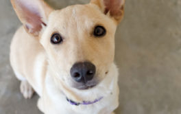 Shelter dogs up for adoption may be nervous in your home