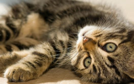 If you see your cat rolling around on the floor, they want to play