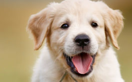 Neuter your dog or puppy once they're at least six weeks old