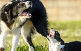 Dogs have varying personality traits, just like human beings