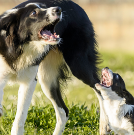 You can speak the dog language by watching how they behave