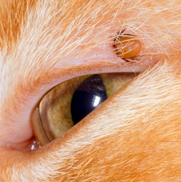 The tick you found on your cat could be carrying lyme disease