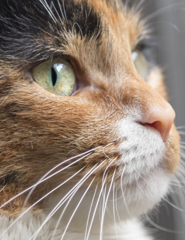 A cat's face can be host to any stage of a tick's life cycle