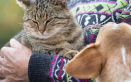A jealous dog's behavior will change, if you hold another pet