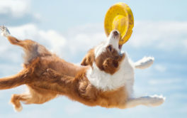 During the summer, you can train your dog to catch a frisbee