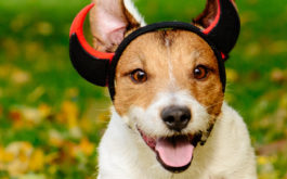 Dress your dog in a comfortable costume this Halloween