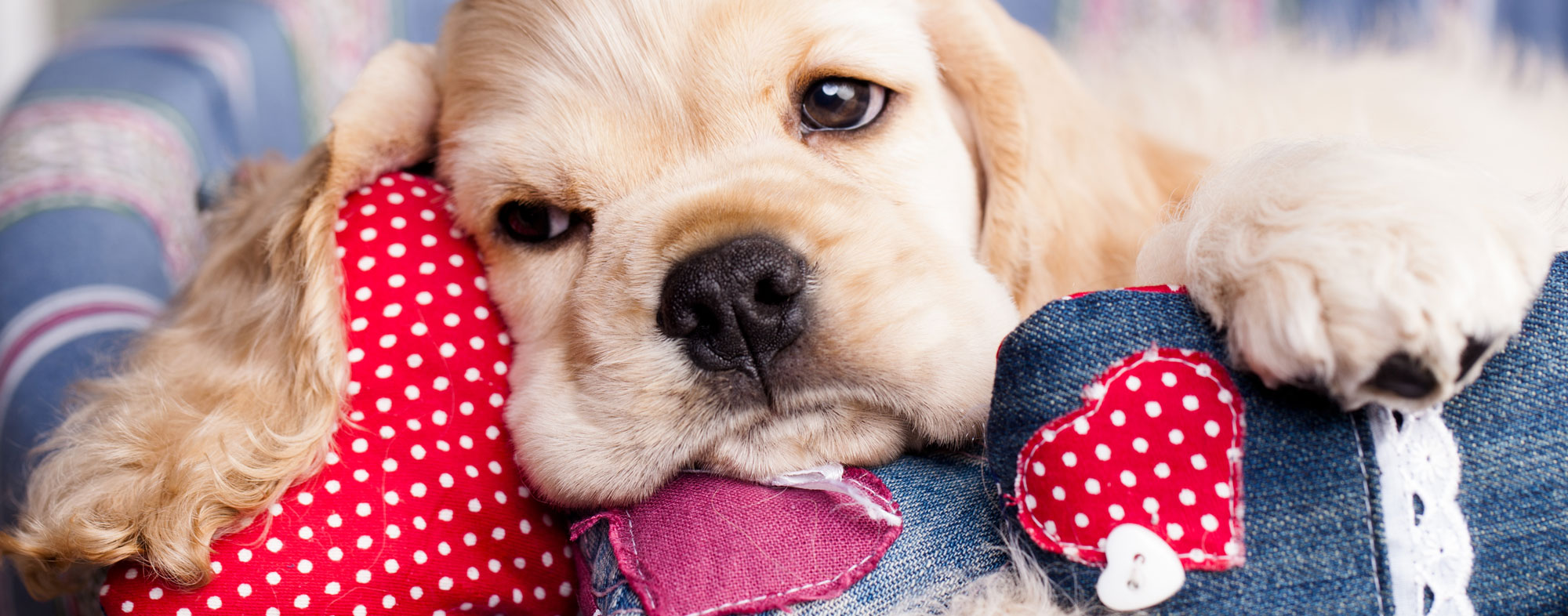 Avoid giving your dog any Valentines Day foods or they'll get sick