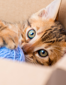 You can invent games to play with your cat, with a ball of yarn