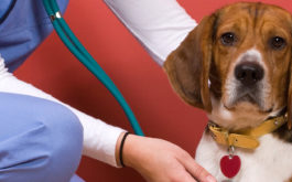After assessing your dog, the vet may offer a vaccination schedule