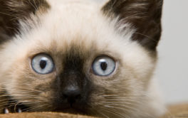 Small kittens can be great gifts for children, but prep your home first