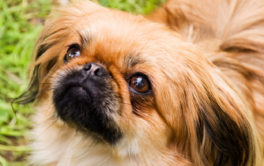 A small adopted dog may be the perfect companion for your family