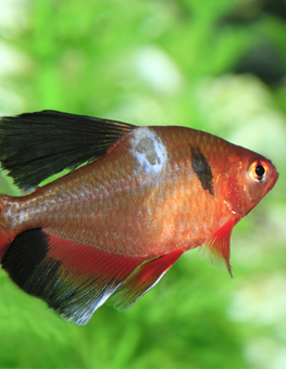 White spots on your fish's skin may be signs of an Ich infection