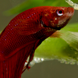 Make sure your fish tank has a variety of bottom and top feeders