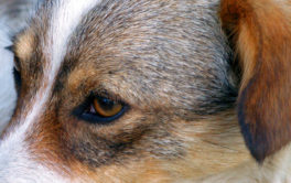 Your dog could have fleas on its face and still show no symptoms