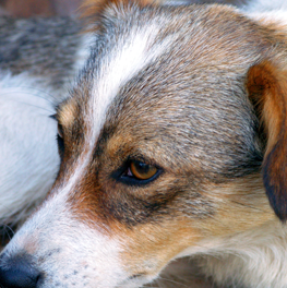 If your dog has fleas, it's imperative that you treat this immediately