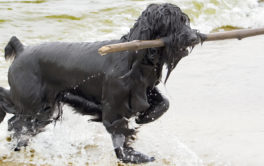 After swimming and fetching sticks, your dog will be ready for a bath