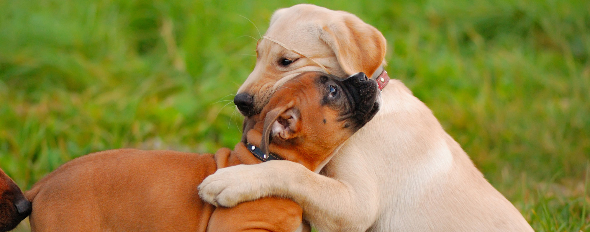 By playing with other animals, your puppy will socialize properly