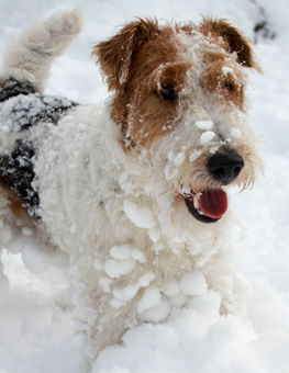 When the cold weather hits, protect your dog's paws in the snow