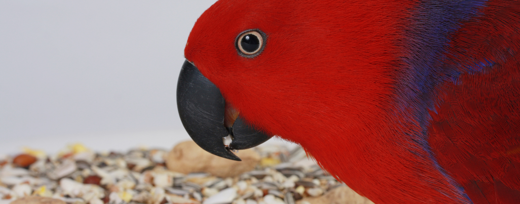 What birds should and do eat includes dried fruits and peanut butter
