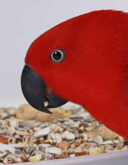 Your pet bird will love eating foods that contain nuts, seeds and fruits