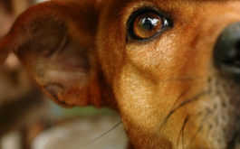 Unless adopted, a local shelter dog risks being euthanized