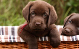If your puppies enjoy the outdoors, give them adventurous dog names