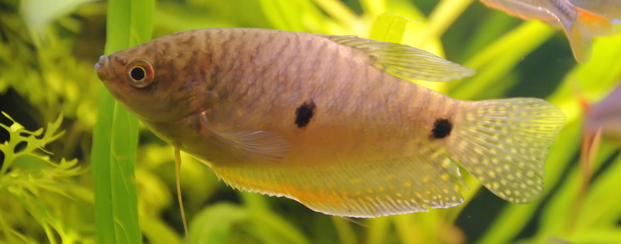 Well-maintained plants in your aquarium will make your fish happier