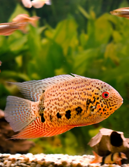 The fish in an aquarium can live peacefully, if you do your homework