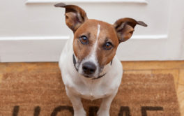 When adopting a dog, be aware of how well trained they may be