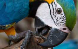 Birds communicate with body language like grinding their beaks