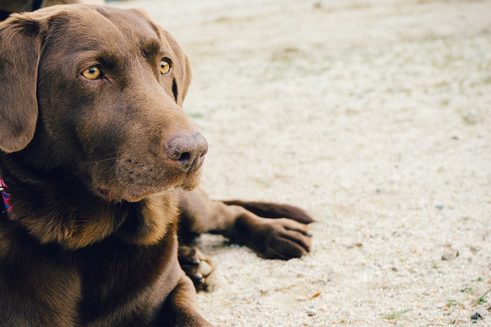 At the beach, a patient dog serves as the perfect companion