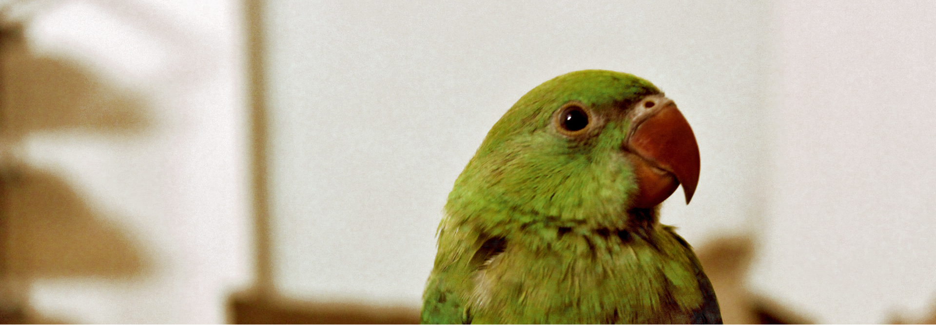 With bright green plummage, parakeets do in fact talk, if trained