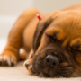 When bringing a new puppy home, give them comfortable rugging