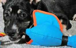 Gauge your dog's personality before buying a new toy for them