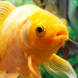 Your fish will be sensitive to temperature changes in their aquarium