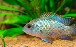 Ideally, the fish in your tank should have access to 8 hours of light