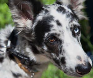 Mix breed dog. Learn more about dog DNA testing cost.