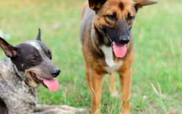 At an off leash dog park, your canines have a chance to socialize