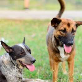 Your dogs can be more susceptible to diseases at an off leash park