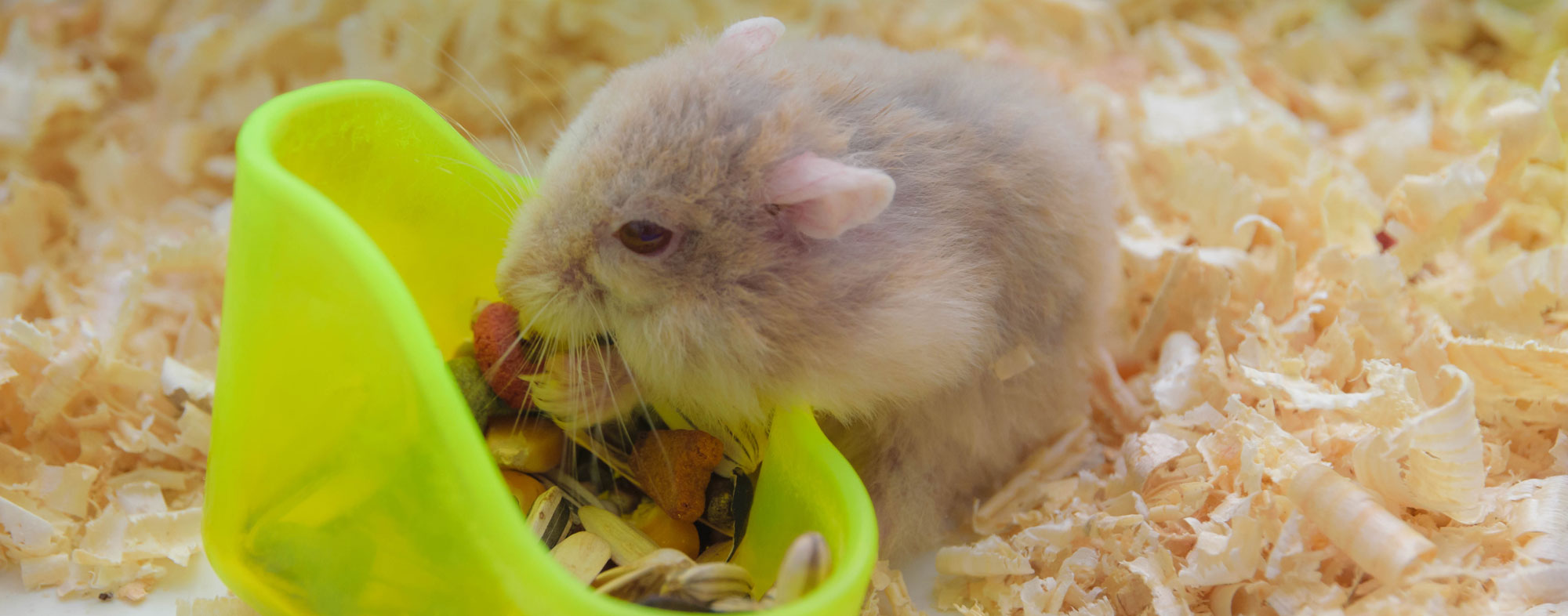 Your small pet animal will appreciate a well-designed cage or habitat