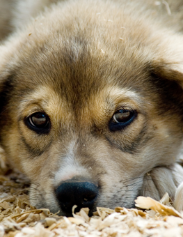 Help a young puppy by adopting them from a dog rescue shelter