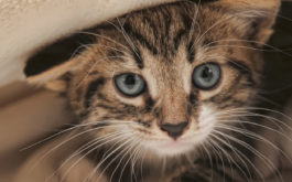 If you adopt a newborn kitten, you must take the place of its mother