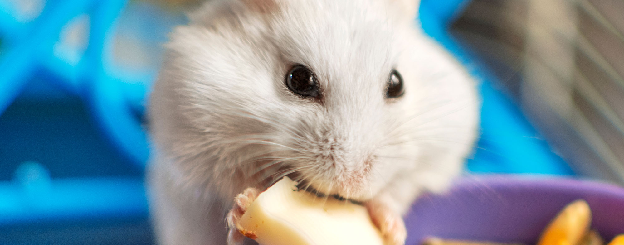 Keep your small animal fed to deter escape from their cage or habitat