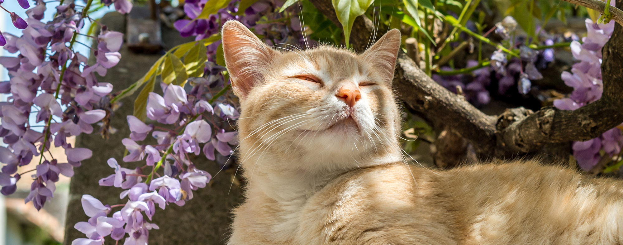 Your cat will gravitate to flowers like catmint when exploring outside