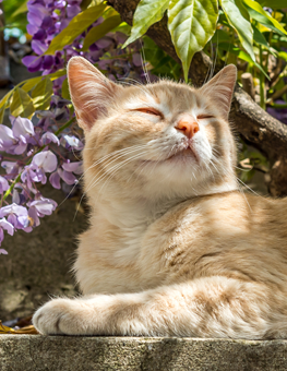 When outdoors, your cat will love surrounding itself with flowers