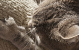 A repellent spray may be best for keeping your cat off the couch